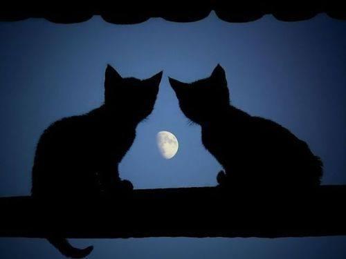 月に語りかける二匹のねこ